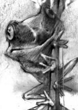 Иллюстрация Георгия Тандашвили к рассказу «Маленький трактат о лягушке и лягушатнике»